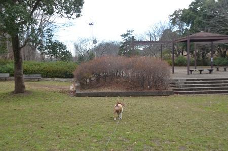 20141217宮の森公園05