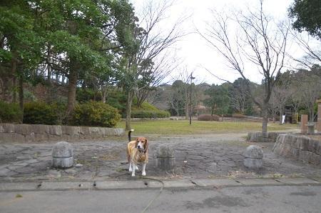 20141217宮の森公園01