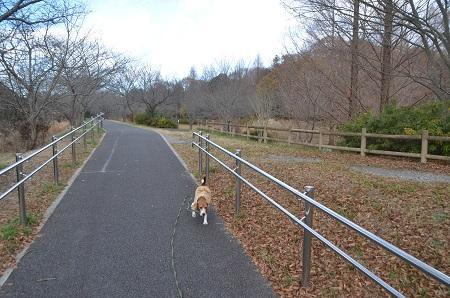 20141217宮の森公園10