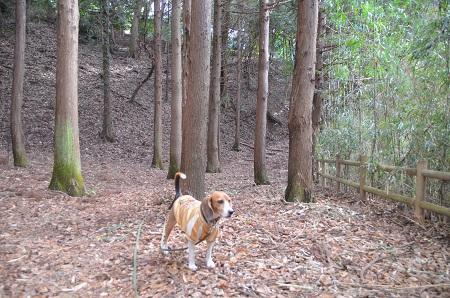 20141217宮の森公園16