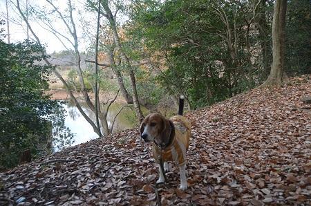 20141217宮の森公園14