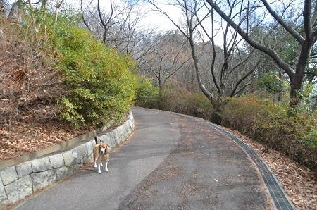 20141217宮の森公園24