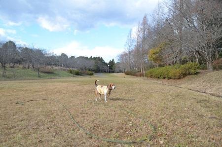 20141217宮の森公園19