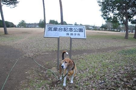 20141217気象台記念公園08