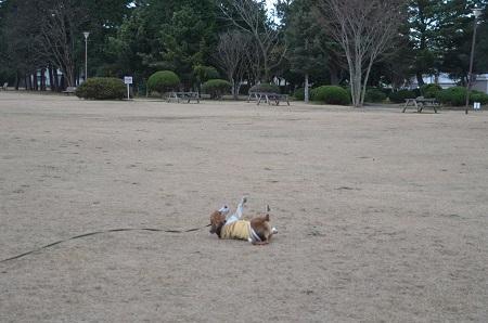 20141217気象台記念公園16