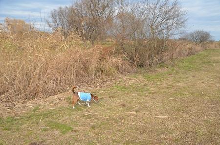 20141221利根川ゆうゆう公園04
