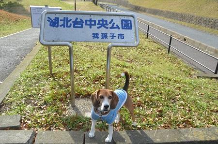 20141221湖北台中央公園17