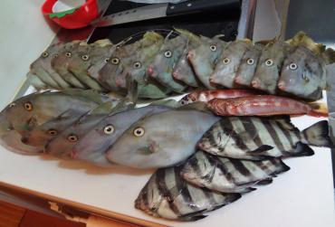 鮮魚センターで買いました