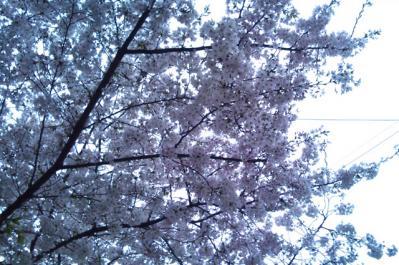 2011-04-10-1.jpg