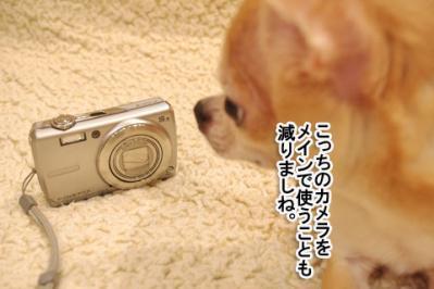 IMGP3041-5.jpg