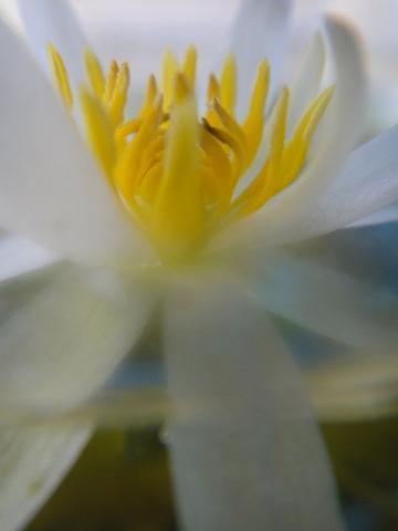 20110616-04.jpg