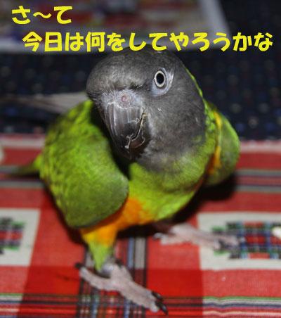 1_チャッピー