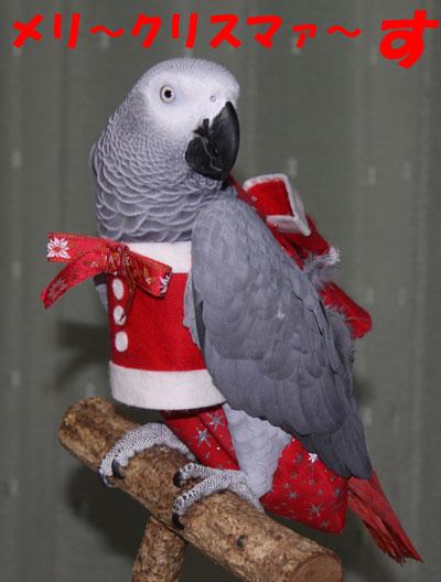 4_メリークリスマス