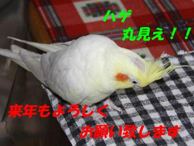 10_ノンちゃん