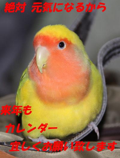 15_リコ