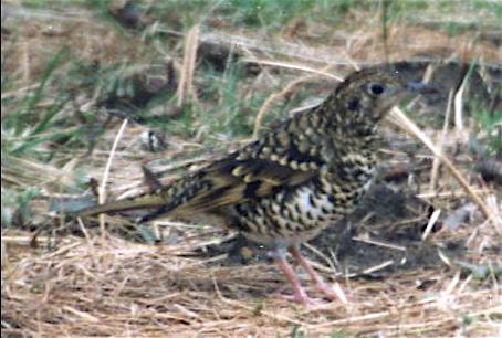 bird05-015.jpg