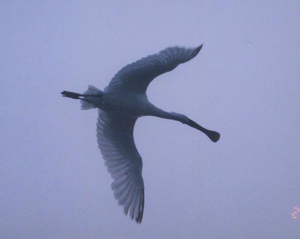 bird08-5.jpg