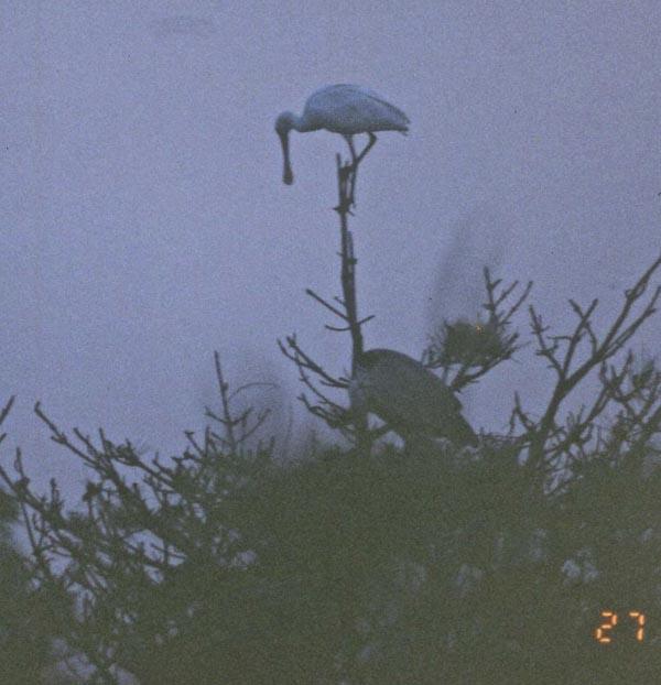 bird09-003.jpg