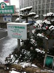 2011雪