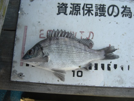 黒鯛29-3