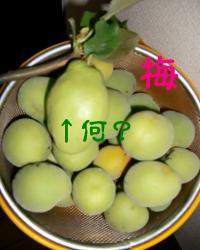 CIMG5583_convert_20100622111902.jpg