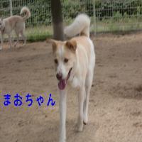CIMG5616_convert_20100624193731.jpg