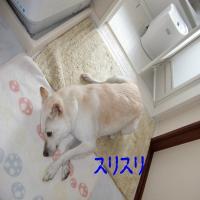 CIMG6545_convert_20100802120745.jpg