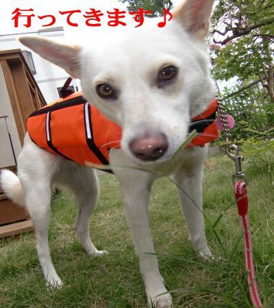 CIMG6842_convert_20100917104925.jpg