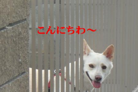 CIMG7245_convert_20100909192354.jpg