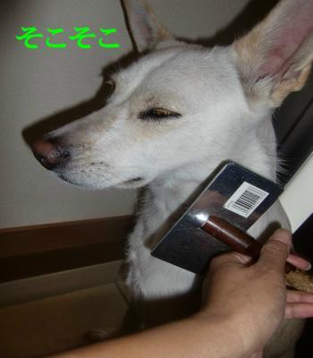 CIMG8208_convert_20101014093248.jpg
