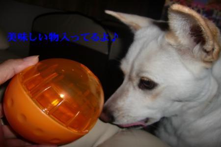CIMG8457_convert_20101022132942.jpg