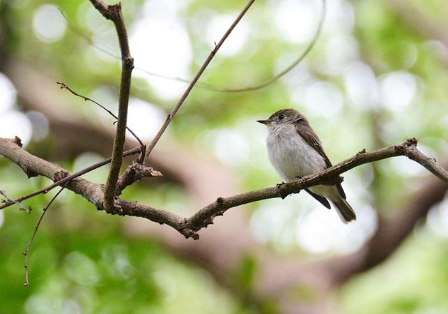 野鳥(4)