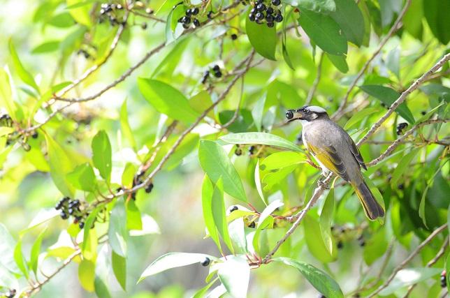 野鳥(2)