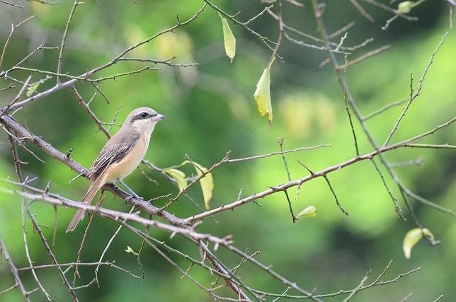野鳥(3)