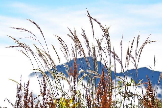 山荘の朝(3)