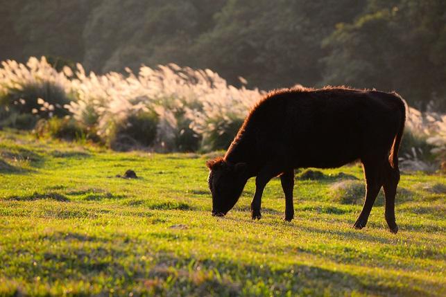 望牧場の夕暮れ(3)