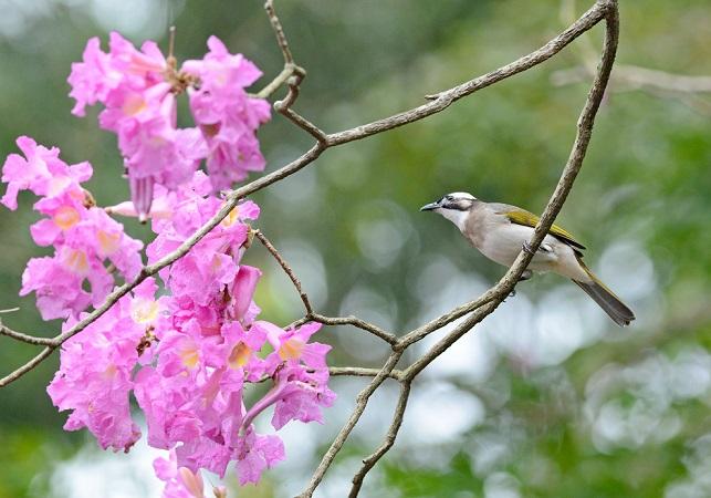 イッペイと野鳥(4)