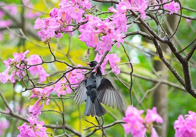 イッペイと野鳥(5)