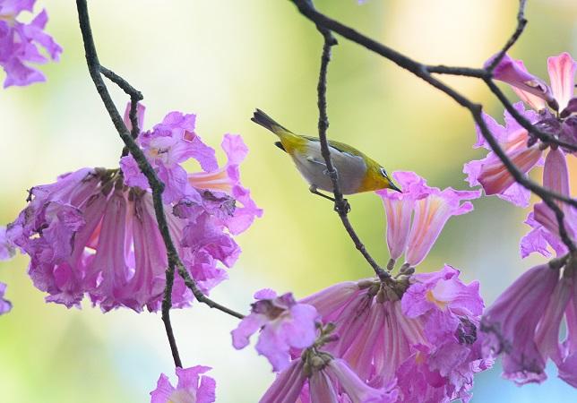 イッペイと野鳥(3)