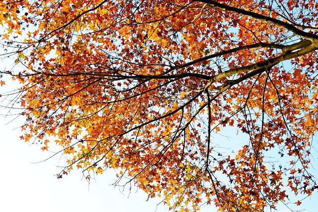 遅い秋(2)