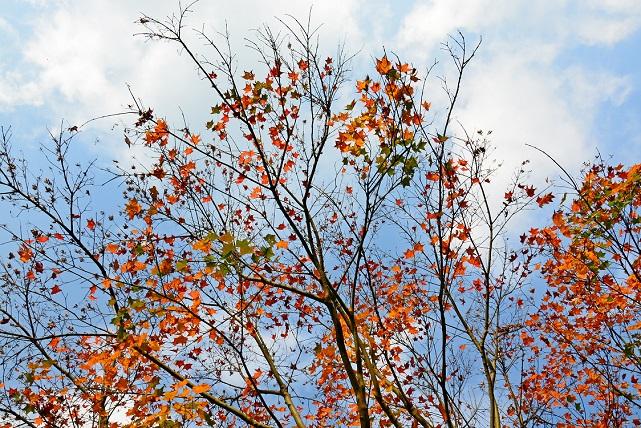 遅い秋(3)