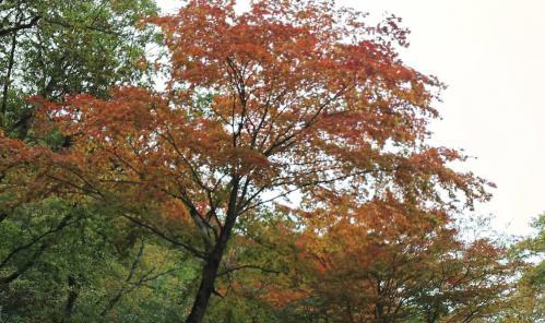 bdcam 2011-10-19 21-11-33-836