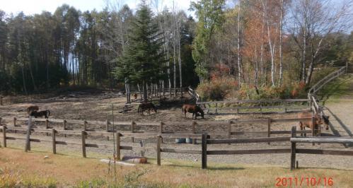 bdcam 2011-10-22 10-49-47-153