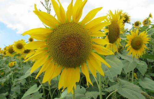 bdcam 2012-08-10 17-18-55-586