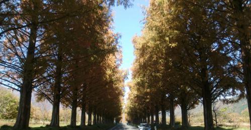 bdcam 2012-11-25 17-50-29-801
