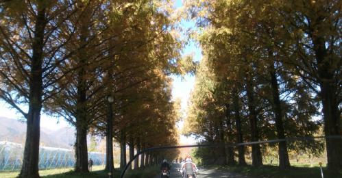 bdcam 2012-11-25 17-49-53-190