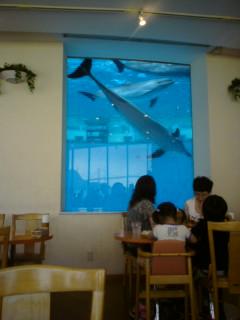 海響館 レストラン店内