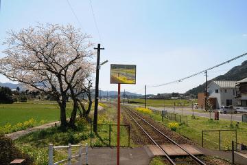 桜情景2012_駒鳴(7)