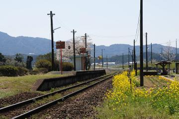 桜情景2012_駒鳴(8)