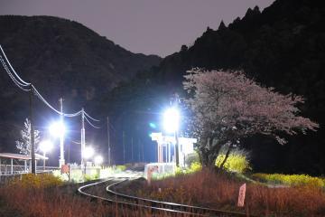 桜情景2012_駒鳴(9)